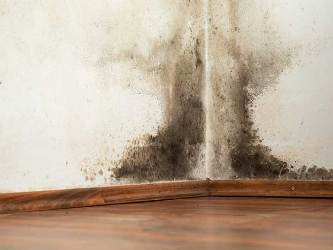3 signs you may have mold growing in your home or business